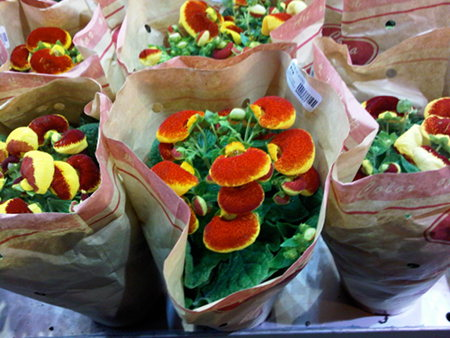 chinese-newyear-flowers
