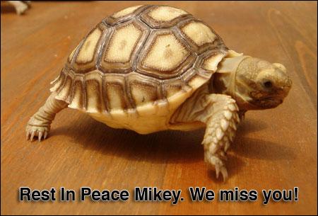 Ruhe in Frieden Mikey