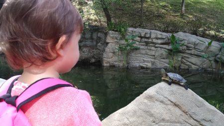Schildkröten gibts in vielen Parks